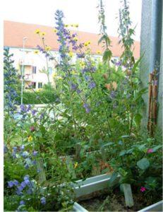 Gartenstyling mal anders @ Goethe-Realschule plus